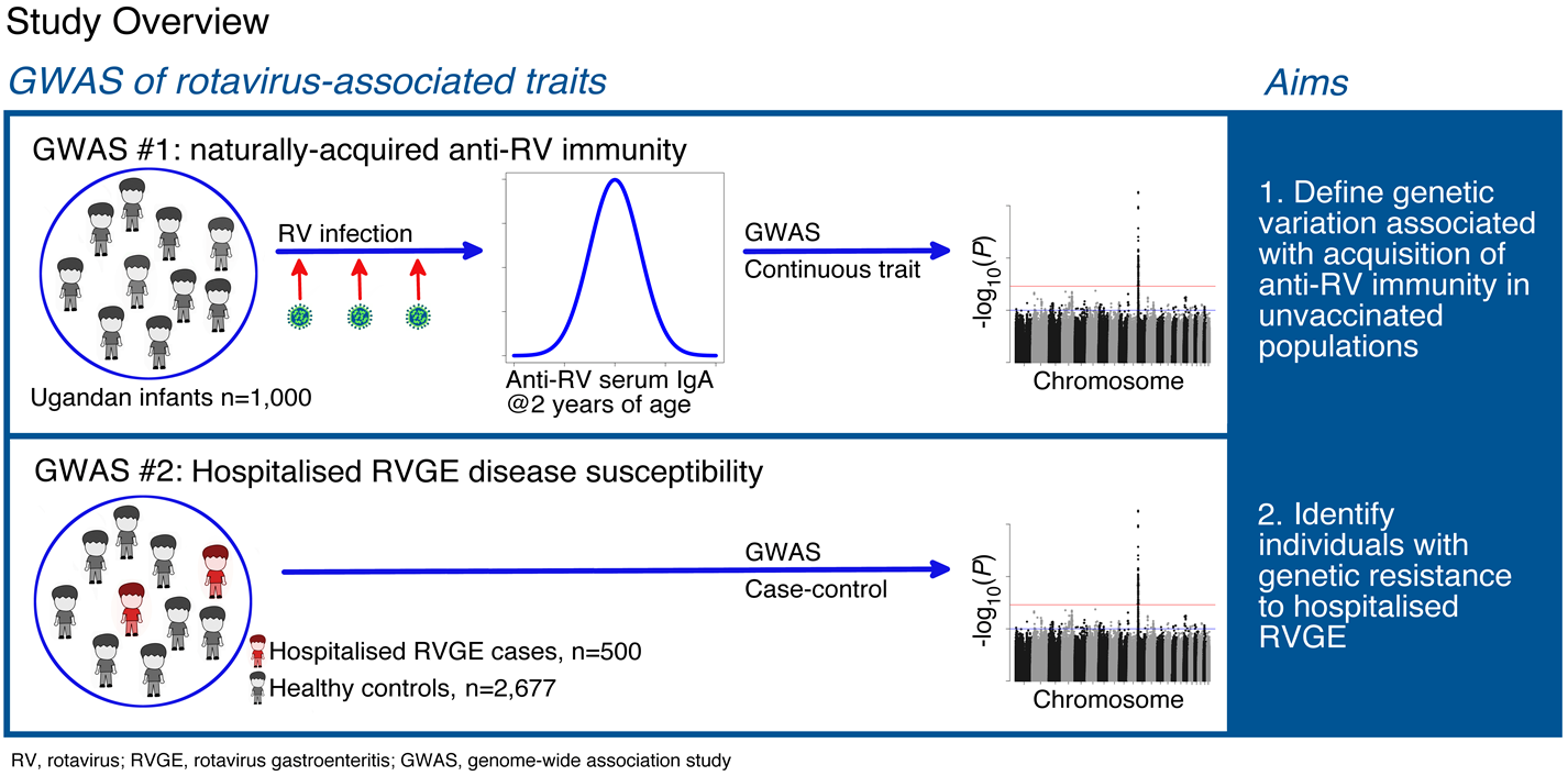 Overview of genome-wide association study (GWAS) of rotavirus-associated traits. Aims: 1. Define genetic variation associated with acquisition of anti-rotavirus immunity in unvaccinated populations (1,000 Ugandan infants with rotavirus infection); 2. Identify individuals with genetic resistance to hospitalised rotavirus gastroenteritis (RVGE), comparing 500 hospitalised RVGE cases to 2,677 healthy controls
